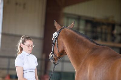 Horse 495