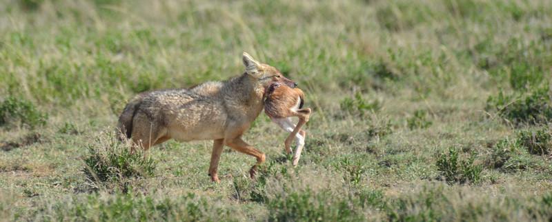 East Africa Safari 392.jpg