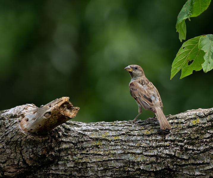 birds-09741-ARW_DxO_DeepPRIME.jpg