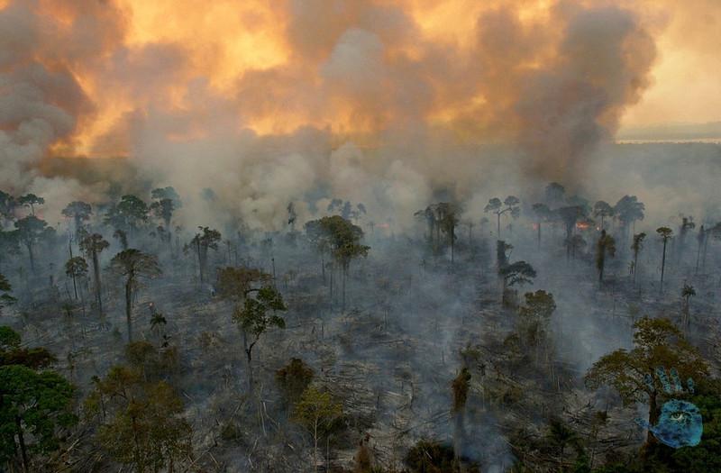 Burnings in the Amazon