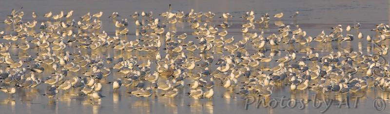 2007-12-19 Gulls at RMBS