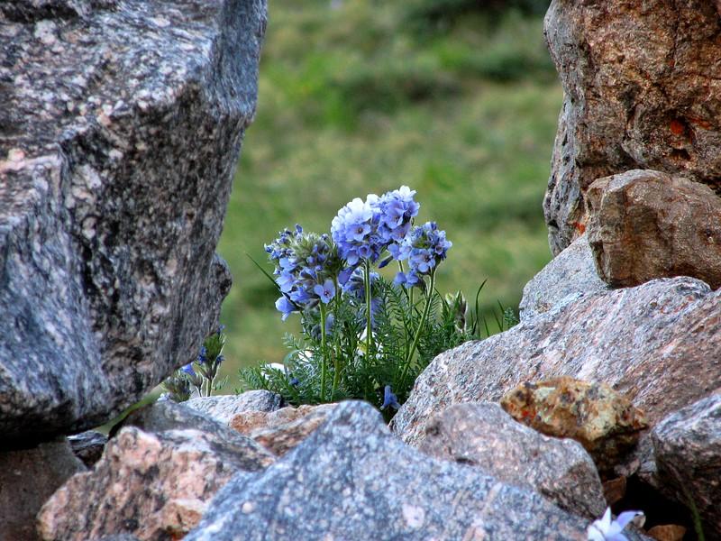 amh FLOWERS (1408).jpg