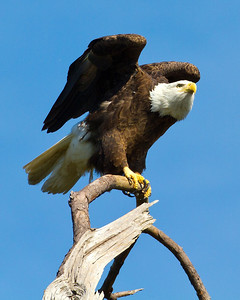 Baytown Eagles 11-19-10