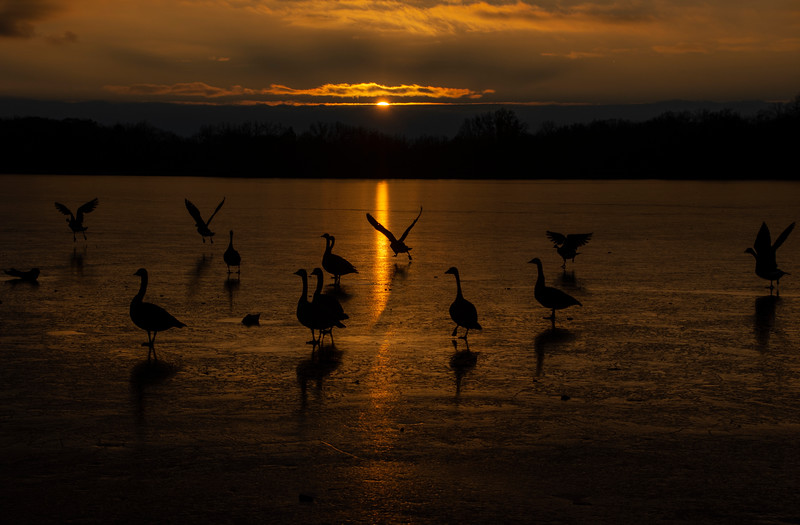 Sunset-Wingfoot-lake-geese.jpg