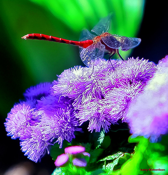 flower dragon fly 2.jpg