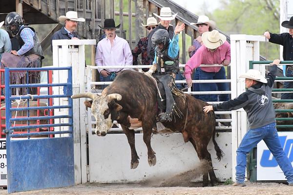 Rigby Bull Wars