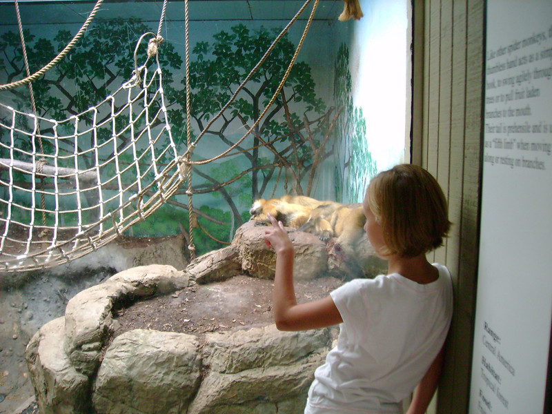 Summer in the Primates Exhibit.