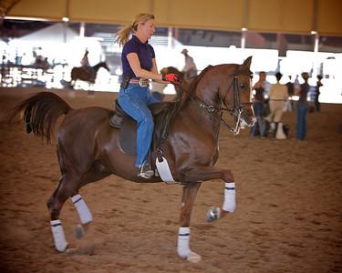 Karen Stull - Arabian - practice ride
