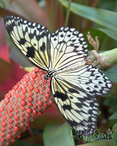 Butterflies, Bees & Spiders