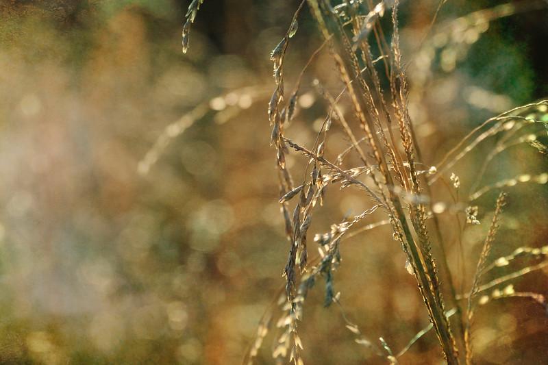LTD_2011-12-27_0442_6