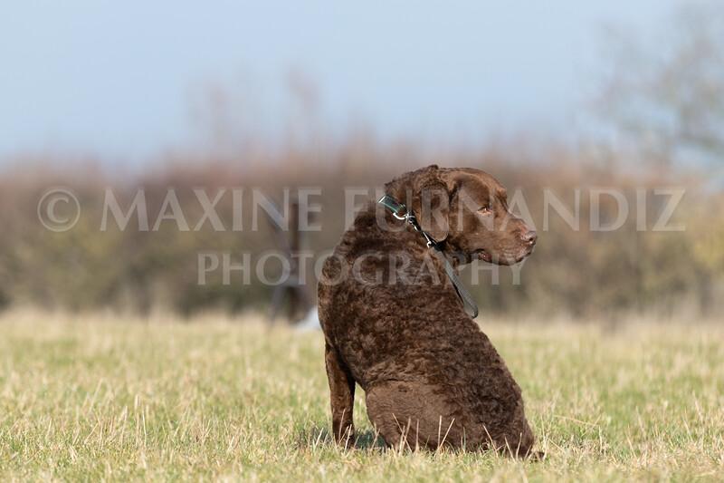 Dog Training Novice GD Feb2019-5792.jpg