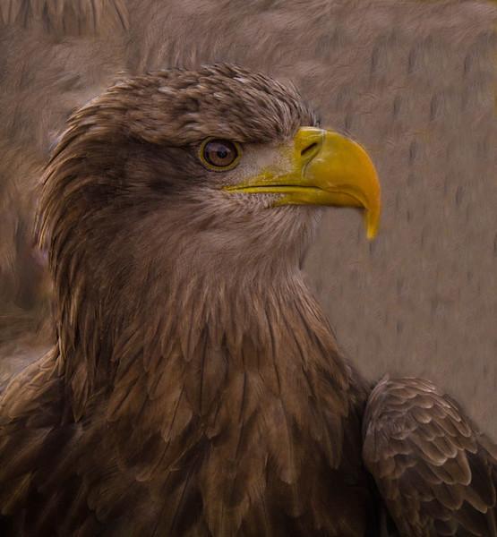 Mike Crowley Emma the Eagle_edited-1.jpg