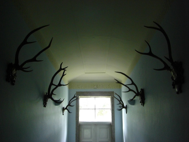 Antlers on the Hall - Bohemia, Czech Republic