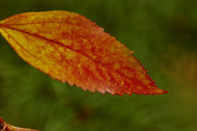 fallleafgreenbackground.jpg