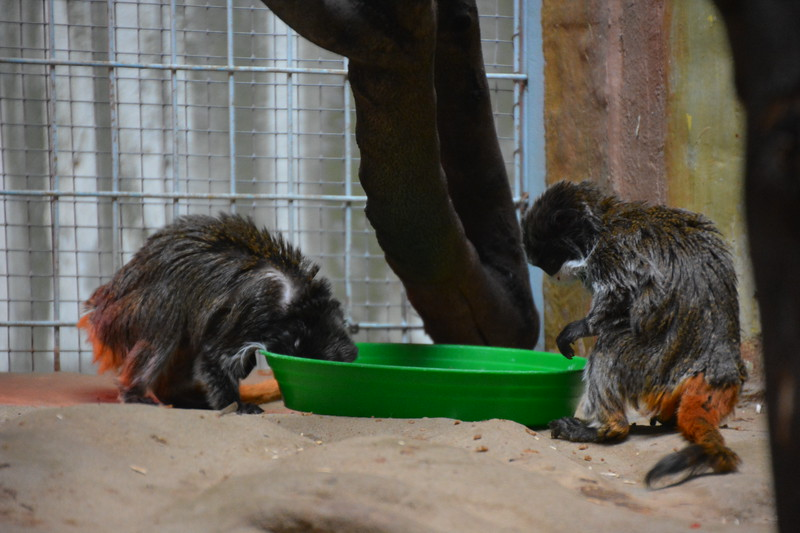 20180624 Antwerpen Zoo GVW_9287.JPG