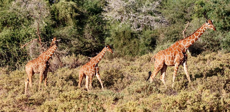 Kenya 2015-02320.jpg