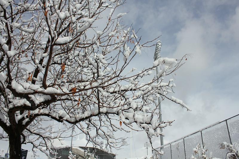 Snowy_Morning_11_10_2012_3314.JPG