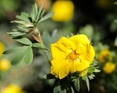 Barnby Dun Garden Flowers