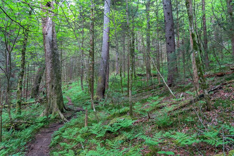 Mountains-to-Sea Trail -- 5,180'