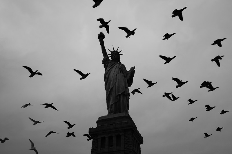 Birds fly around the Statue of Liberty in New York, NY on Nov. 17, 2019.