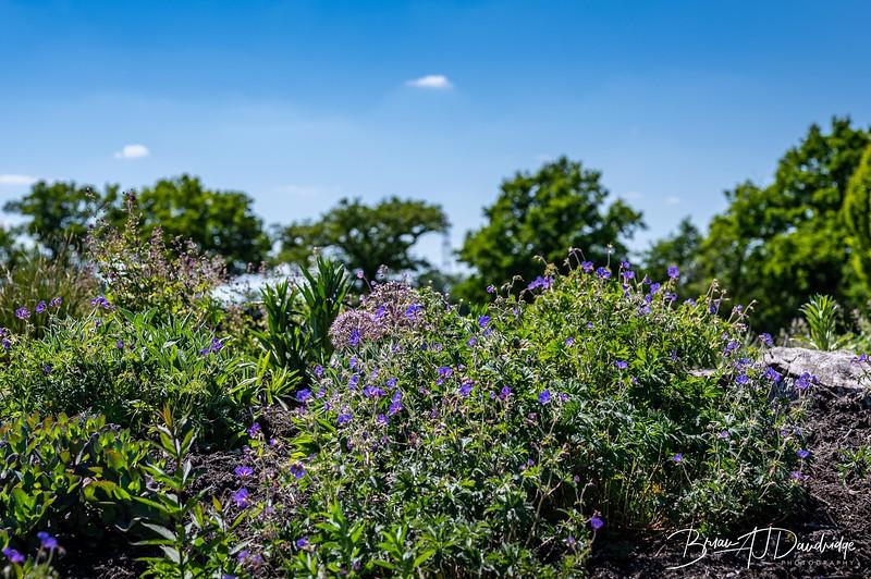 Sussex Prairie Gardens Z6-3753.jpg