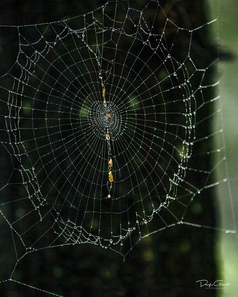 Beauty of the Smoky Mountains Magnified by the Water Droplets of this Spider Web