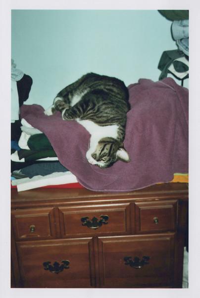 2005_Cats_0002.jpg