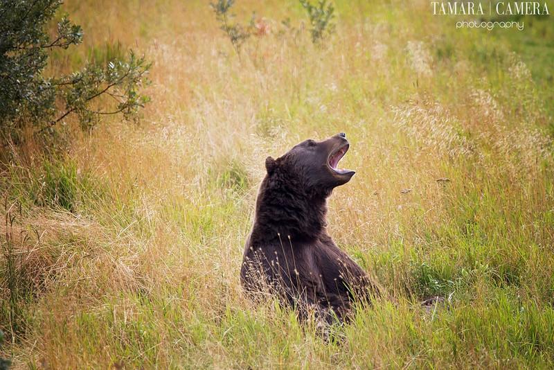 Bear2-4-2.jpg