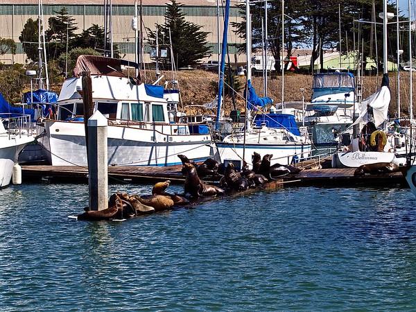 Whale Watching in Santa Cruz Bay