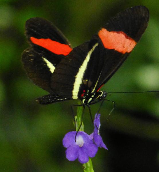 Day7-Mainau butterfly2.jpg