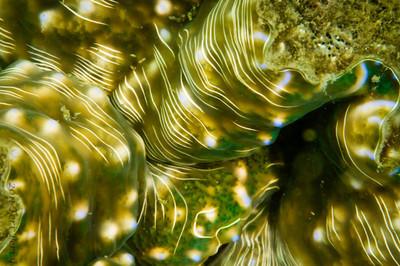 clam-4944