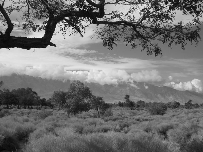eastern-sierra-view.jpg