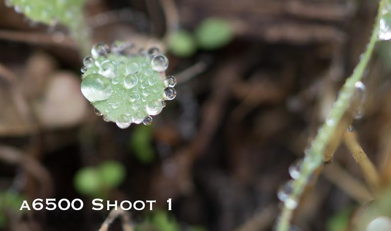 a6500 macro - Shoot 1-12.jpg