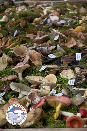 Mushroom Expo 2013