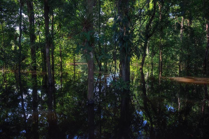 WaterForestWEB.jpg