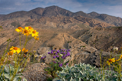 SAN DIEGO DESERT
