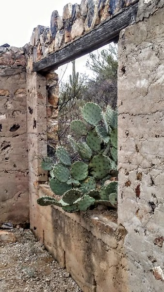 The Window that Grew the Cactus