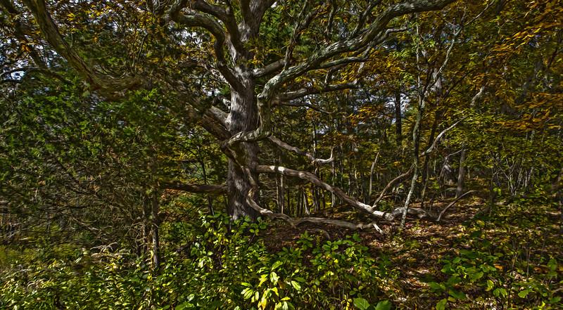 broadmoor wildlife sanctuary_07.jpg