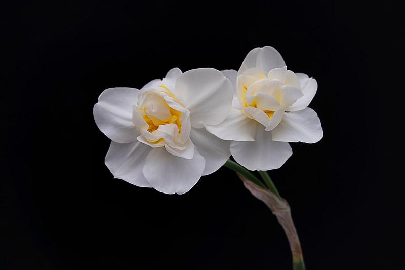 Flowers033120-57.jpg