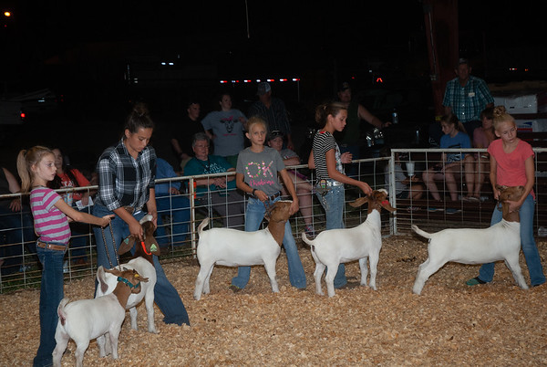 Mt. View Fair Goats