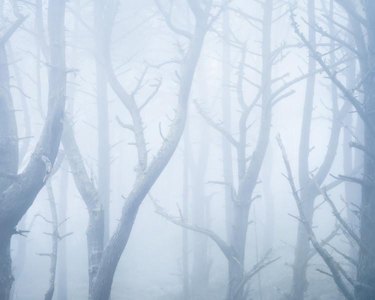 presidio_trees_2_2020_print.jpg