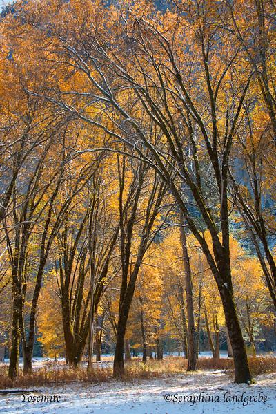_DSC2136Fall Yosemite.jpg