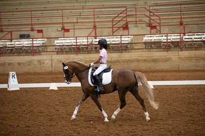 Horse 479