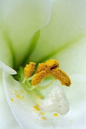 Flower - Favourites