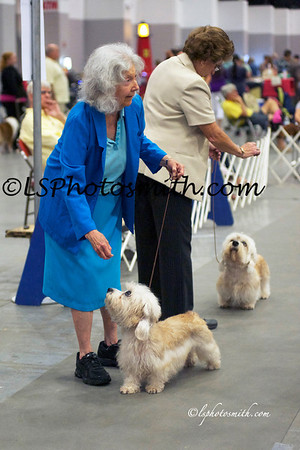 Best in Show and Best in Veterans Sat. 2012.  A little terrier group, a few goldens, maltese  mixed in!