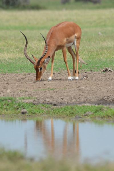 East Africa Safari 12.jpg
