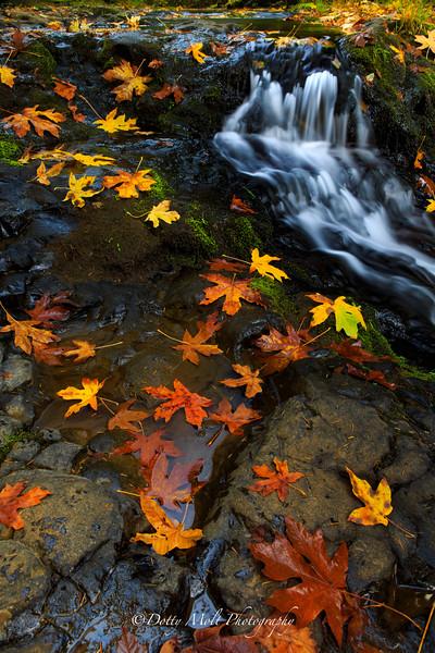 Oregon Waterfalls and Wildflowers