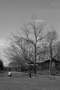neighborhood Nature