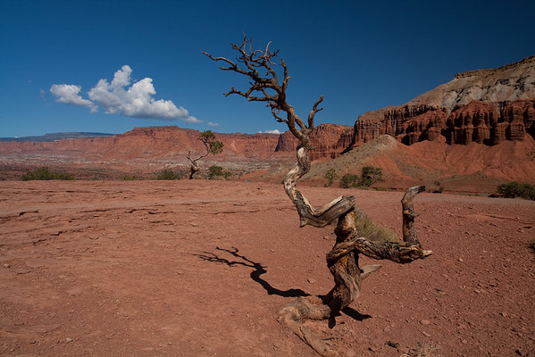 2009 Road Trip - Capitol Reef and Bryce Canyon