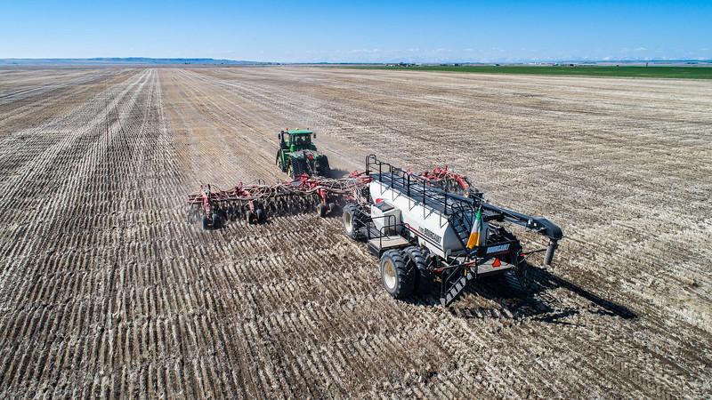 barley 19.jpg
